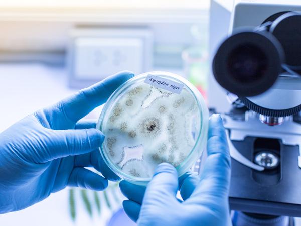 Schimmeltest - Institut für Keimanalysen und Bestimmung von Schimmelpilzen 4